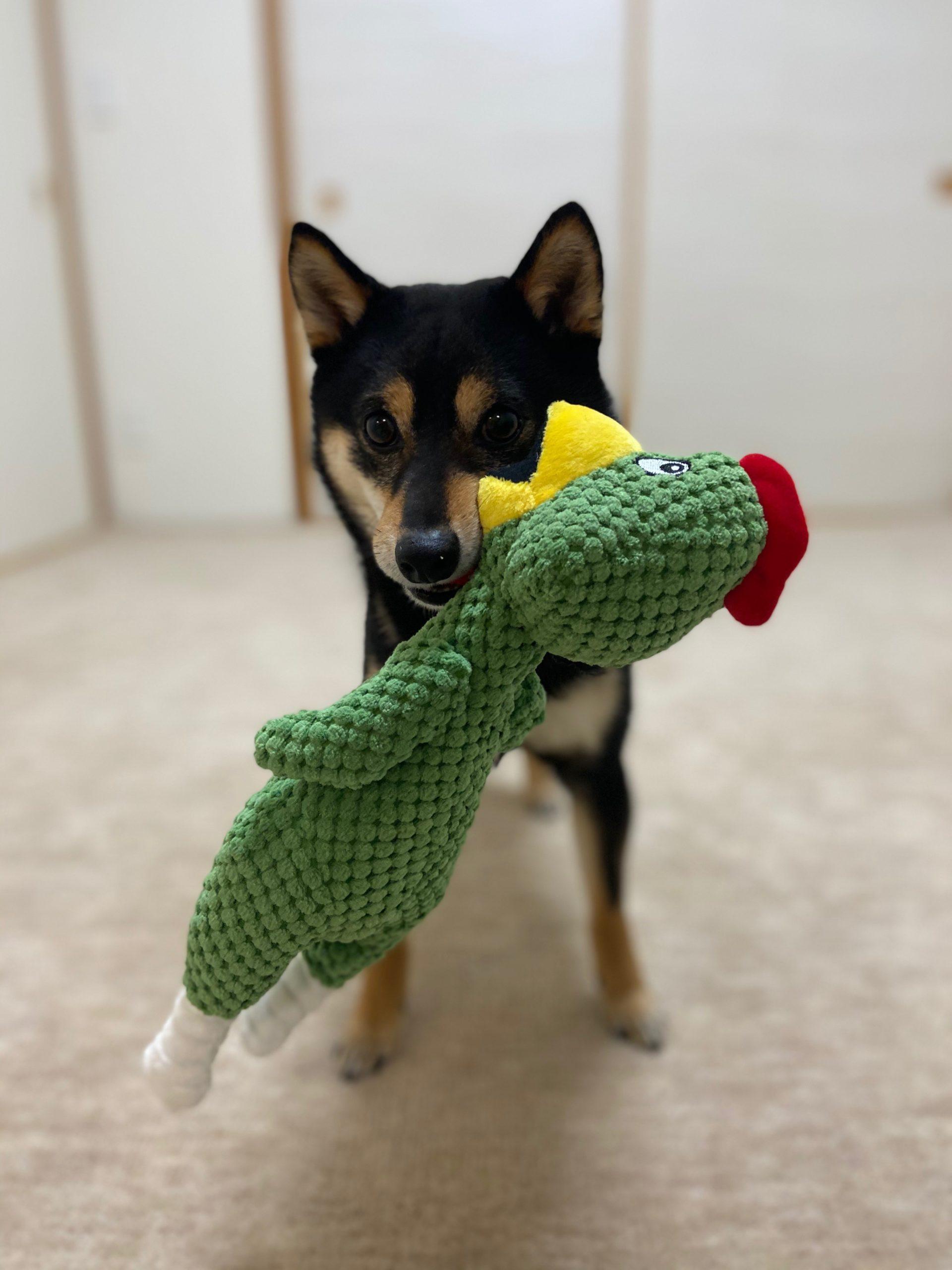 犬ようのおもちゃ